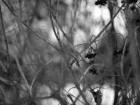 Röthenbach in schwarzweiss