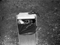 Schwarzweiss-Negativ-Entwicklung: Die ersten Bilder