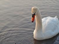 Neulich am Wöhrder See